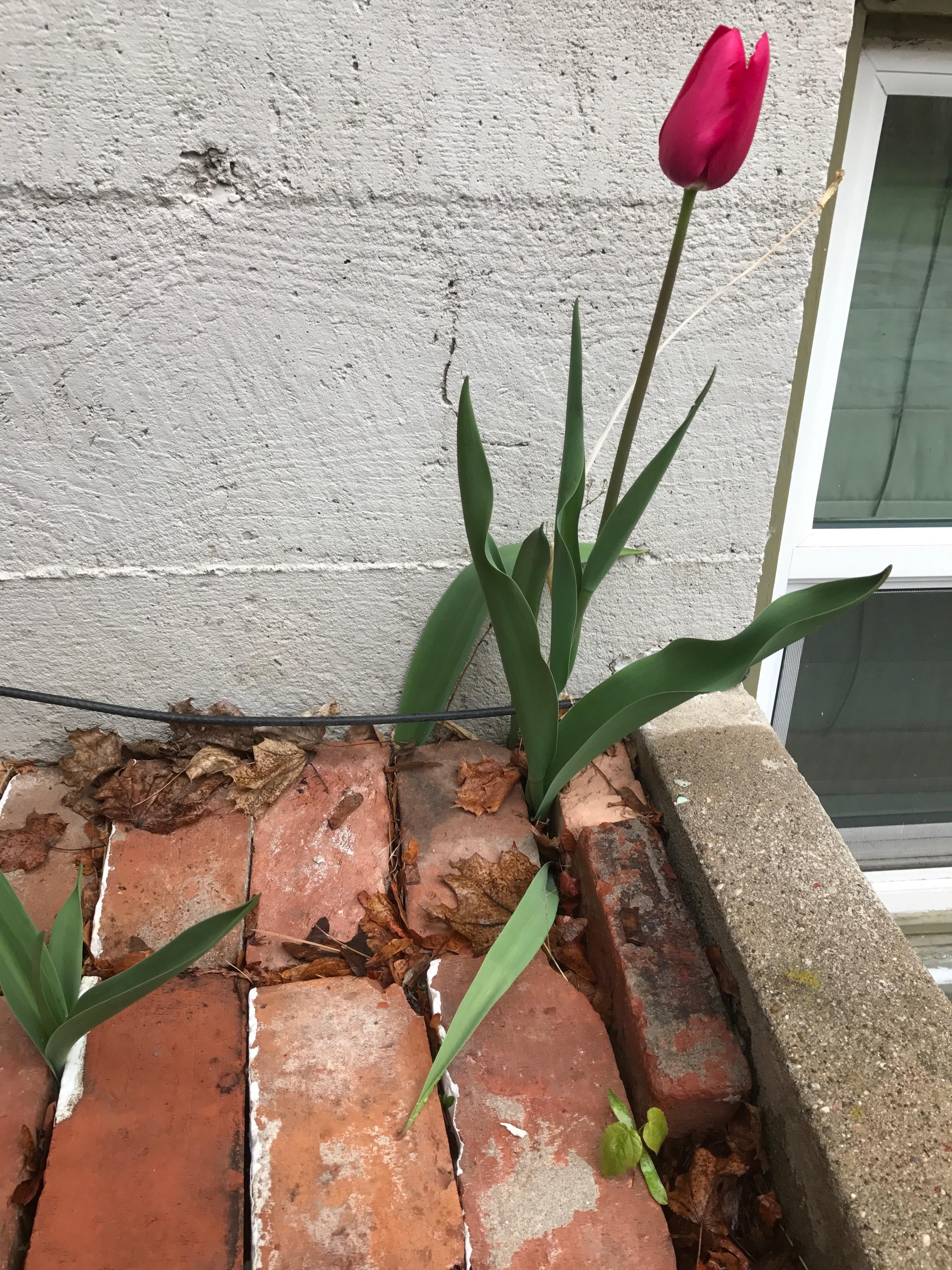 Flower in Bricks