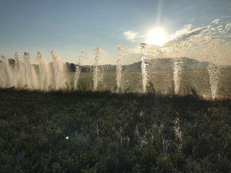 Irrigation Sunrise
